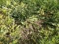 Malas hierbas 3