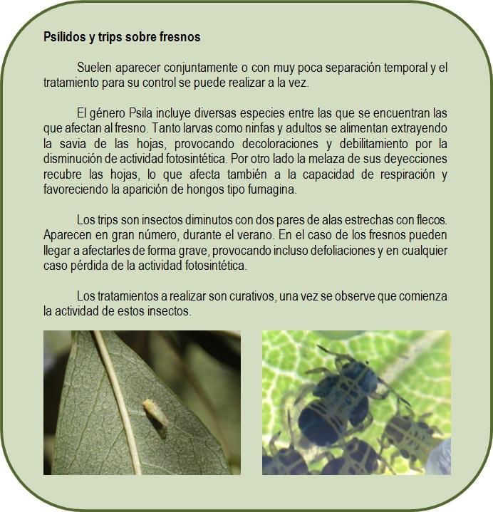 Info Psilidos